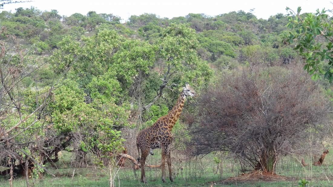 How to visit Akagera Park Cheaply